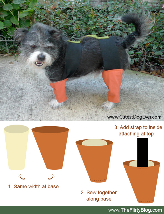 I found the place formerly the flirty blog chia pet kitai a i found the place formerly the flirty blog chia pet kitai a custom halloween dog costume solutioingenieria Images
