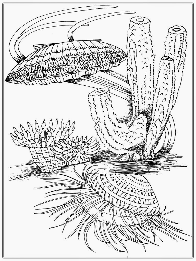 Shells Adult Coloring Pages Images