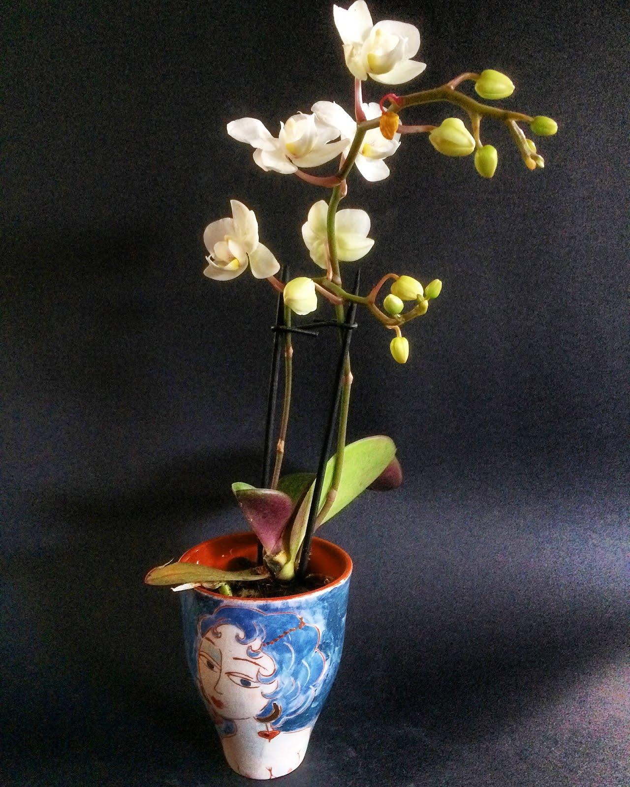 """"""" Céramique à l'orchidée """""""