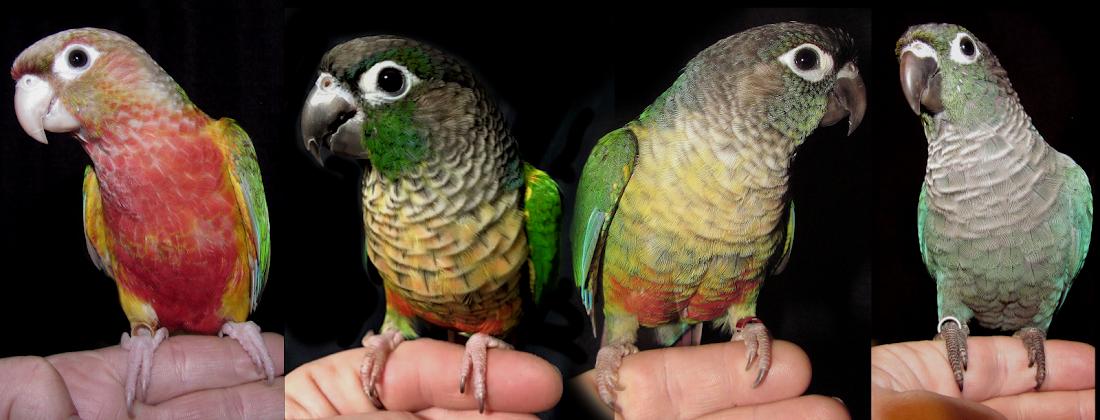 Squeaky Cheeks Aviary Blog