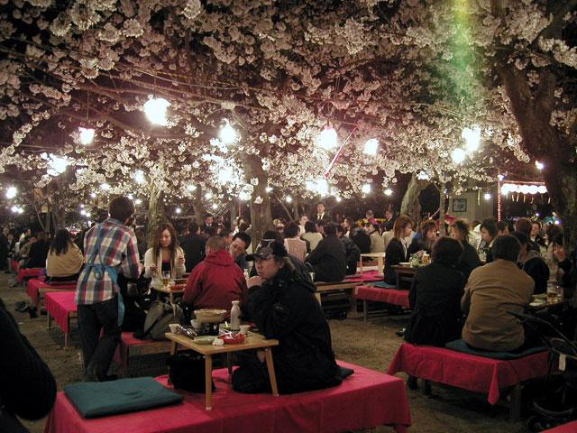 Cherry Blossom Festival Japan