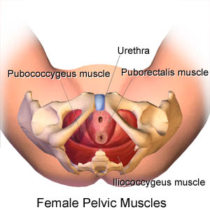 Kegel Exercisesfor Women, or girdle ground muscle workouts are