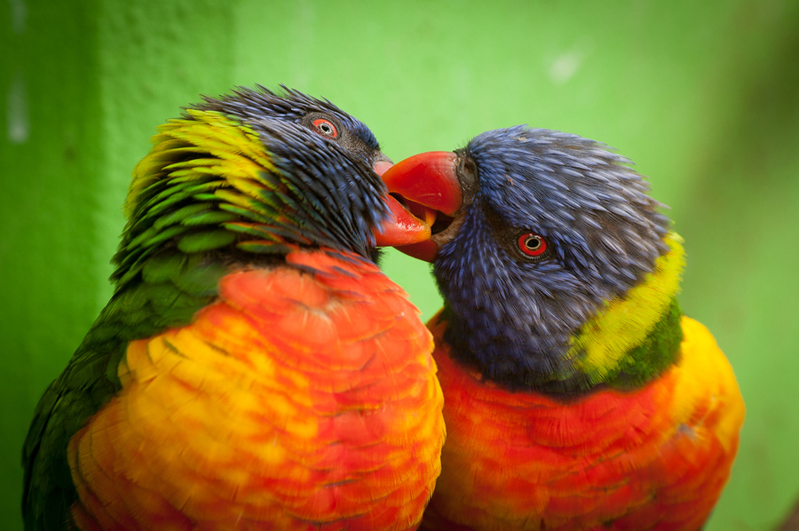Beautiful love birds images - photo#4