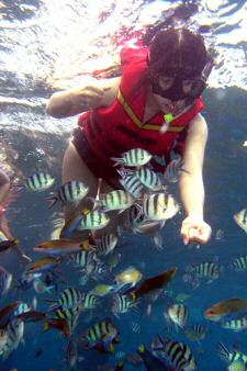 Feeding the fishes whilst snorkeling around Redang islands