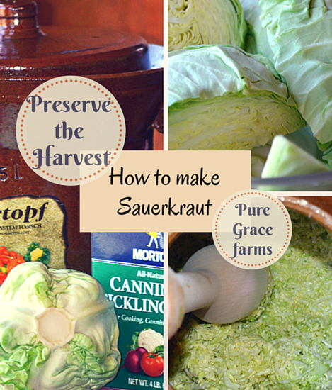 Preserve the Harvest Series: How to Make Sauerkraut   @ Pure Grace Farms