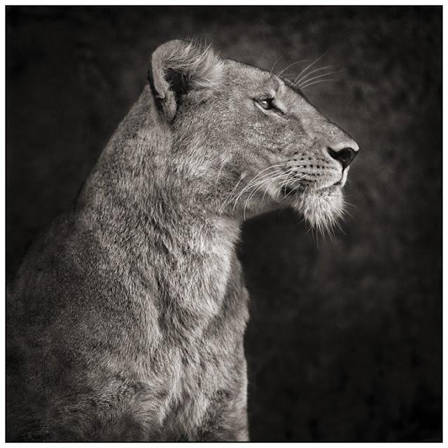 звери африки
