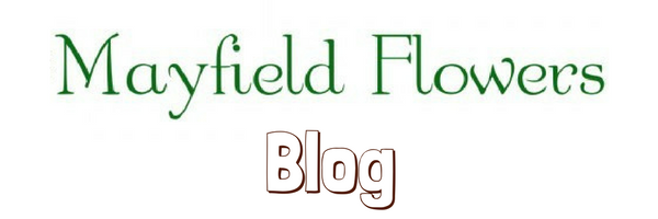 Mayfield Flowers Blog