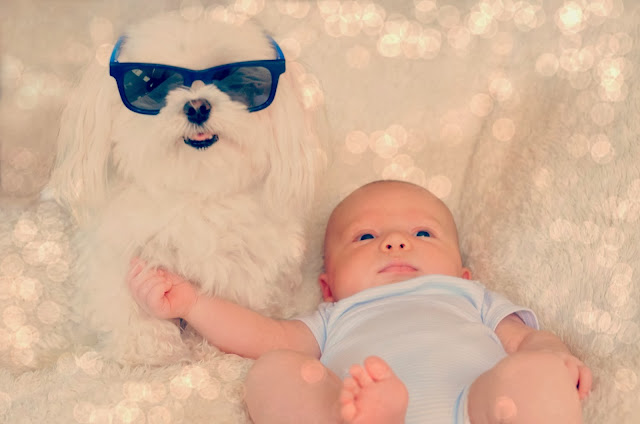 dog wearing sunglasses funny with kid picture