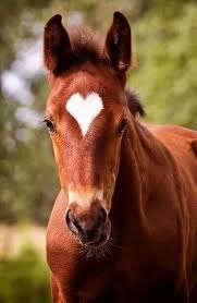 Love and horses put together