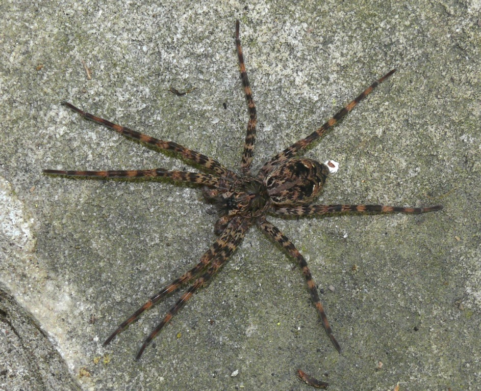 Black hairy spiders in ohio opinion you