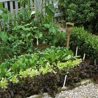 Piano, piano...il nostro orto diventerà così..