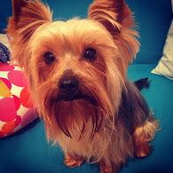 Mi amigo Coco: