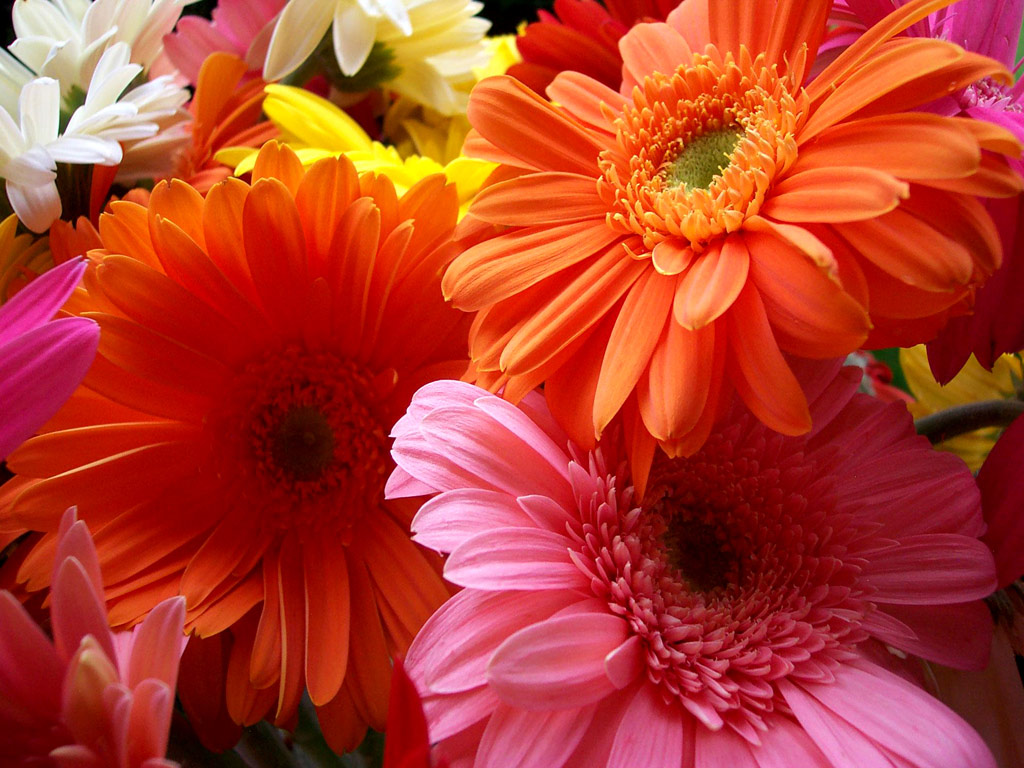 Wallpapers of flowers wallpapers of flowers wallpapers of flowers izmirmasajfo