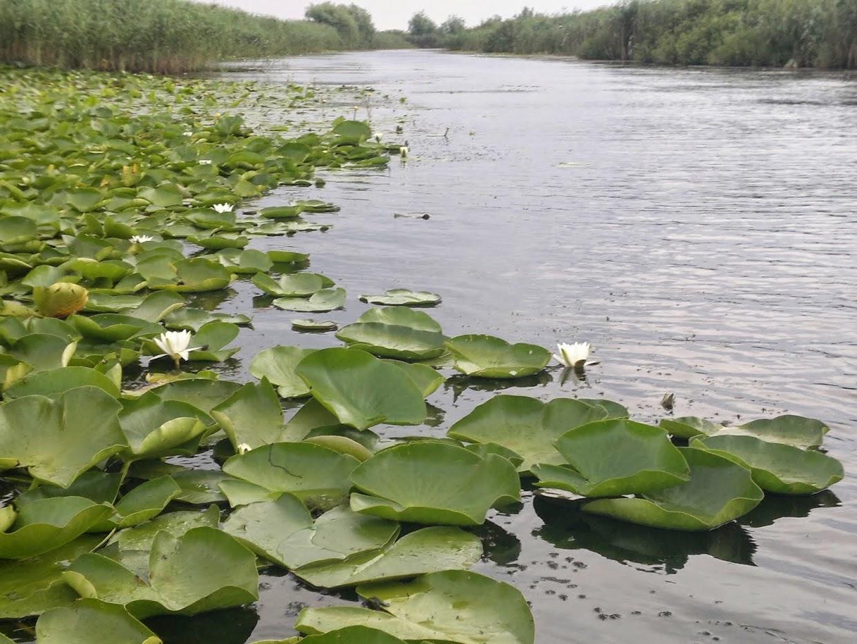 Delta Dunării - canalul Magearu