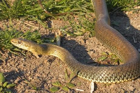 Serpenti, di tutto e di più: marzo 2014