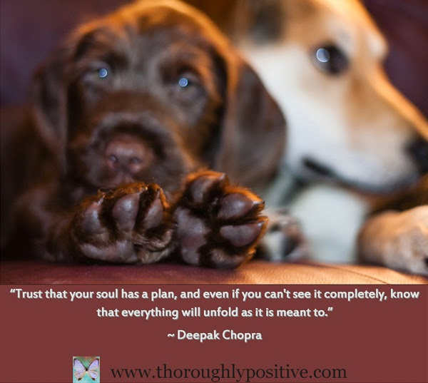 """Trust that your soul has a plan, and even if you can't see it completely, know that everything will unfold as it is meant to."" ~ Deepak Chopra Picture of a puppy with only the soles of his feet in focus."