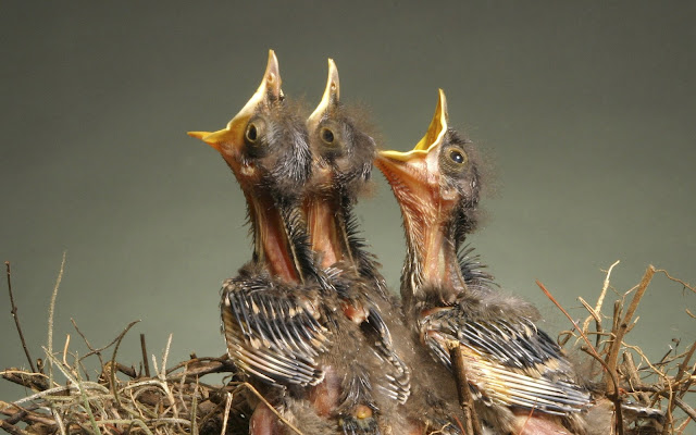 Best Jungle Life baby birds, birds photos, amazing birds