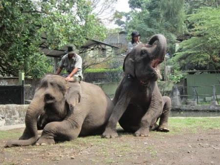 Tempat Wisata Pilihan Kebun Binatang Gembira Loka Yogyakarta