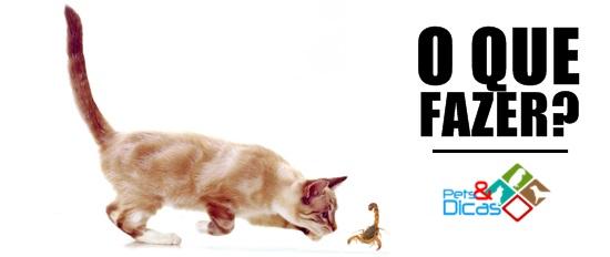 Gato e escorpião