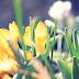 Le printemps est venu : comment, nul ne l'a su.