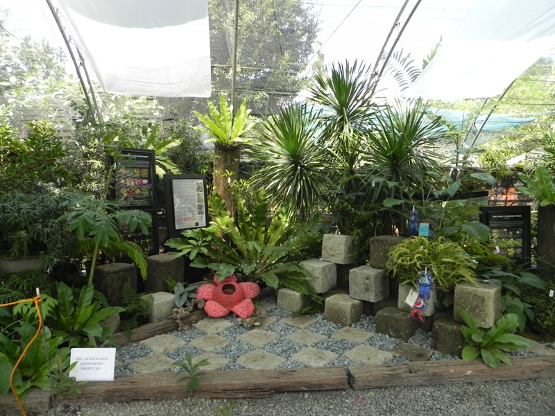 our philippine trees and they said you can 39 t landscape ForPhilippine Garden Plants