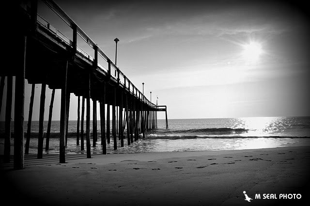Msealphoto fishing pier ocean city md for Maryland fishing piers