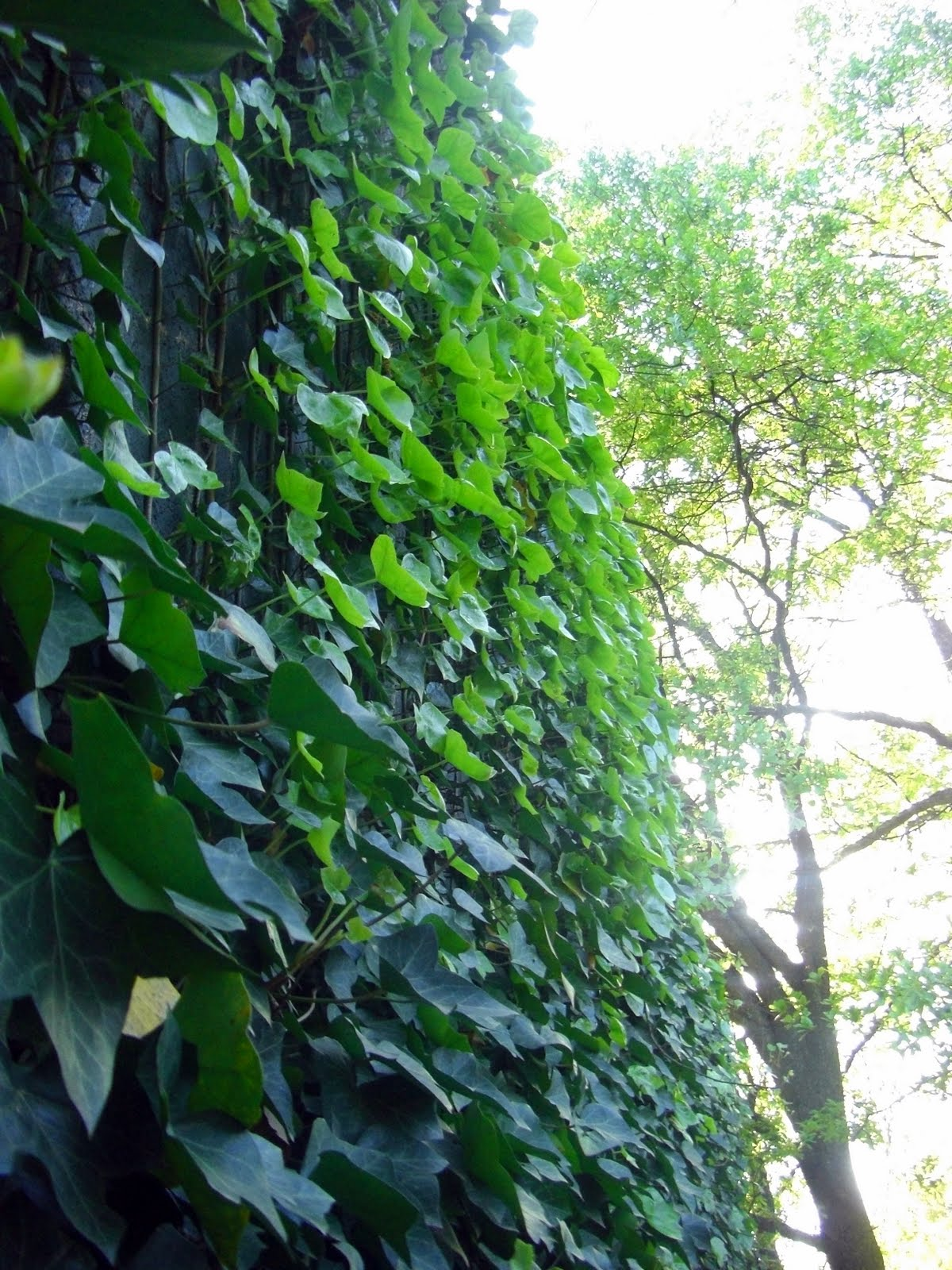 Plants That Grow In The Shade Gardening Forums