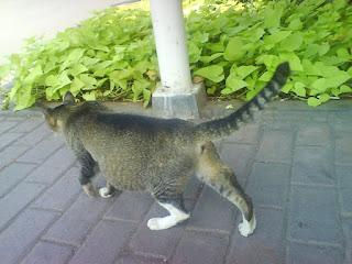Ciri ciri kucing hamil dan perawatannya