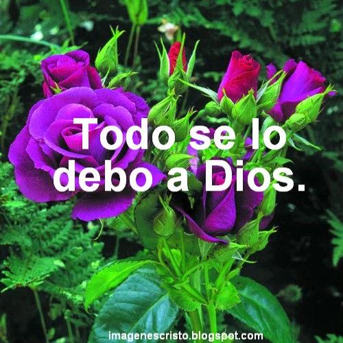 ... Cristianas - Banco de Imagenes: Imagenes Cristianas de Rosas Variadas