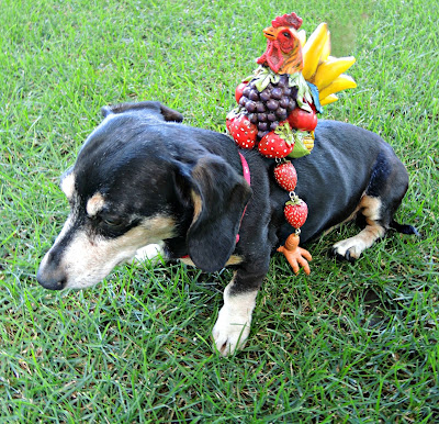 Frooster the fruit rooster riding Doggie.