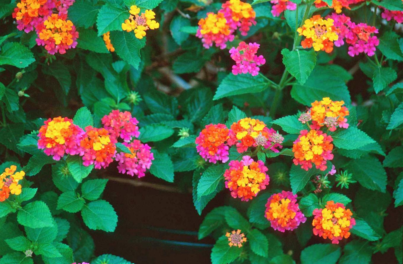 Todo dia é dia de jardinar Espécies que atraem beija flores