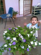 Bunga Jasmin