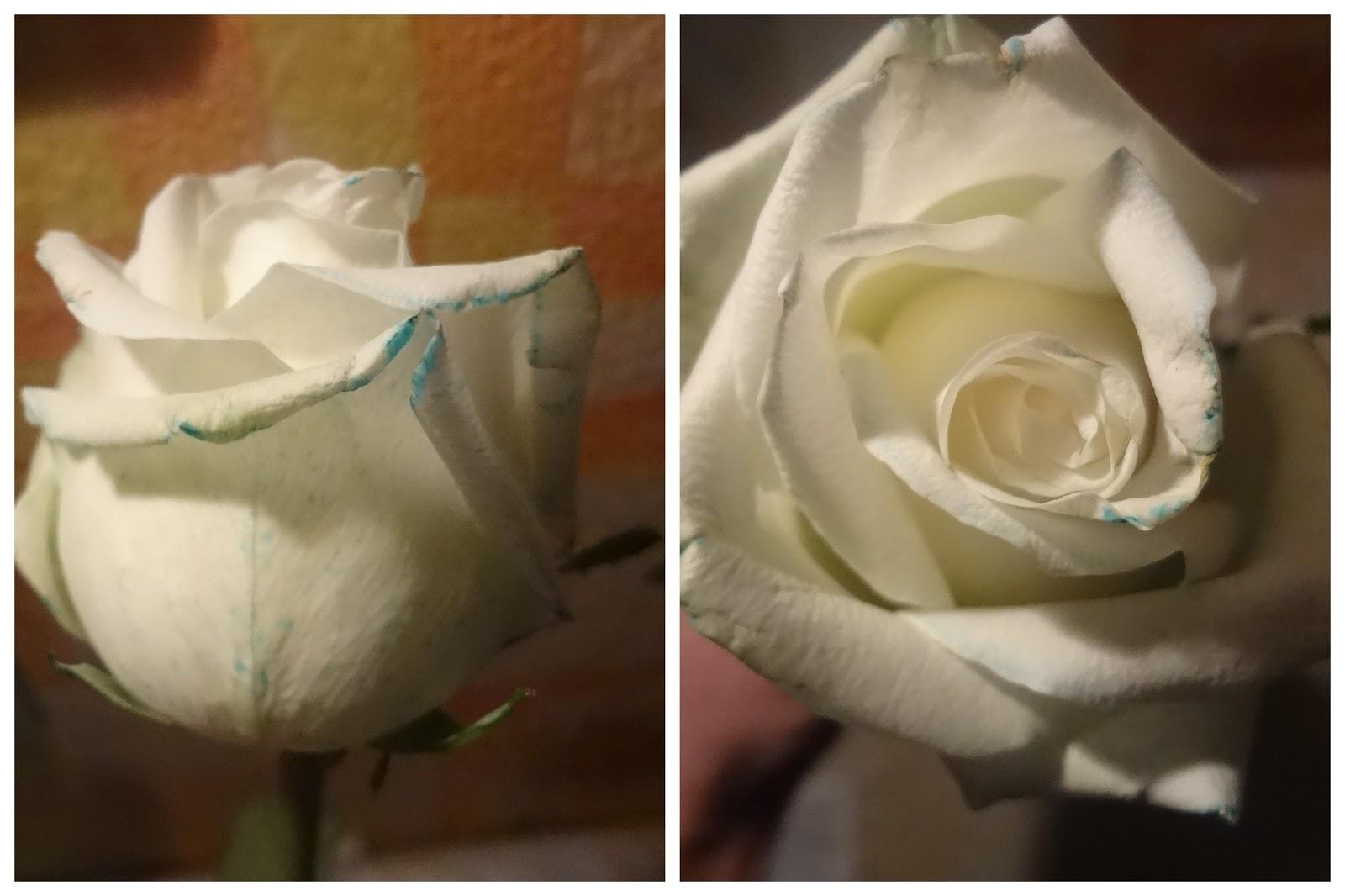 Как покрасить цветы фото