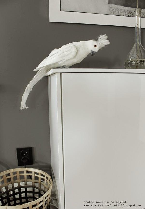 papegoja, inredningsdetalj, inredningblogg, grått och vitt, fågel, fåglar, korg, korgar, vardagsrum, inspiration