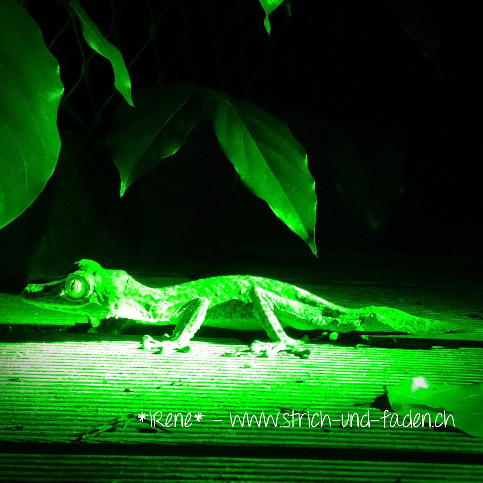 mit Strich und Faden | Nachtwandeln Zoo Zürich Plattschwanzgecko