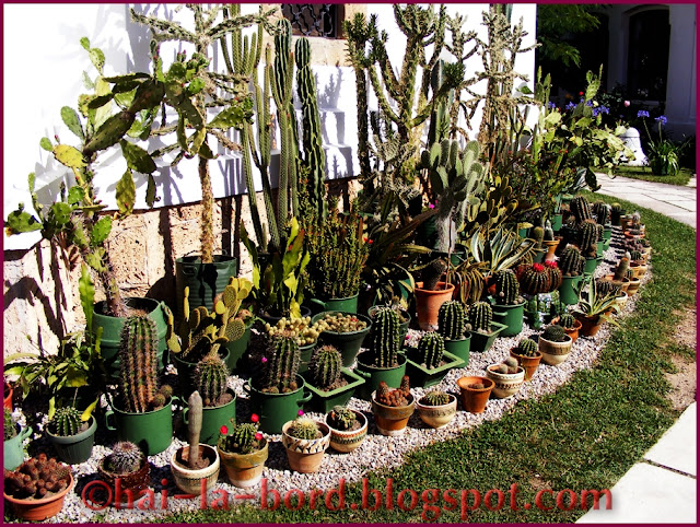 cactusi manastire tismana