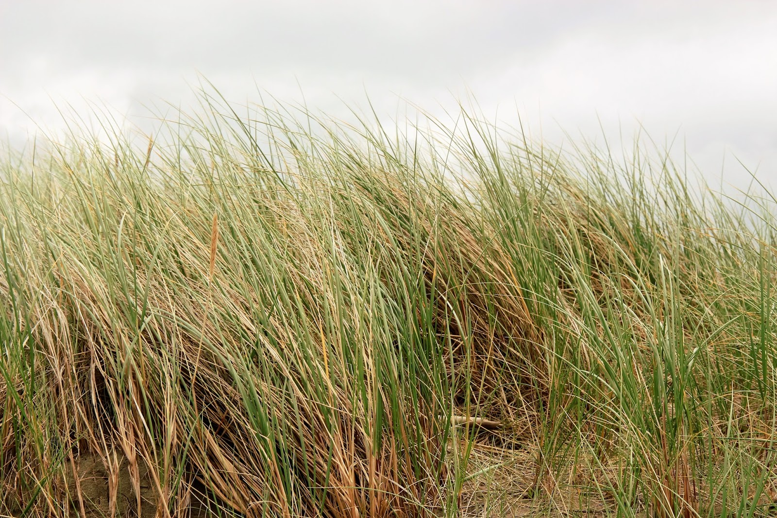 We all are dancers pins and needles for Like long grasses