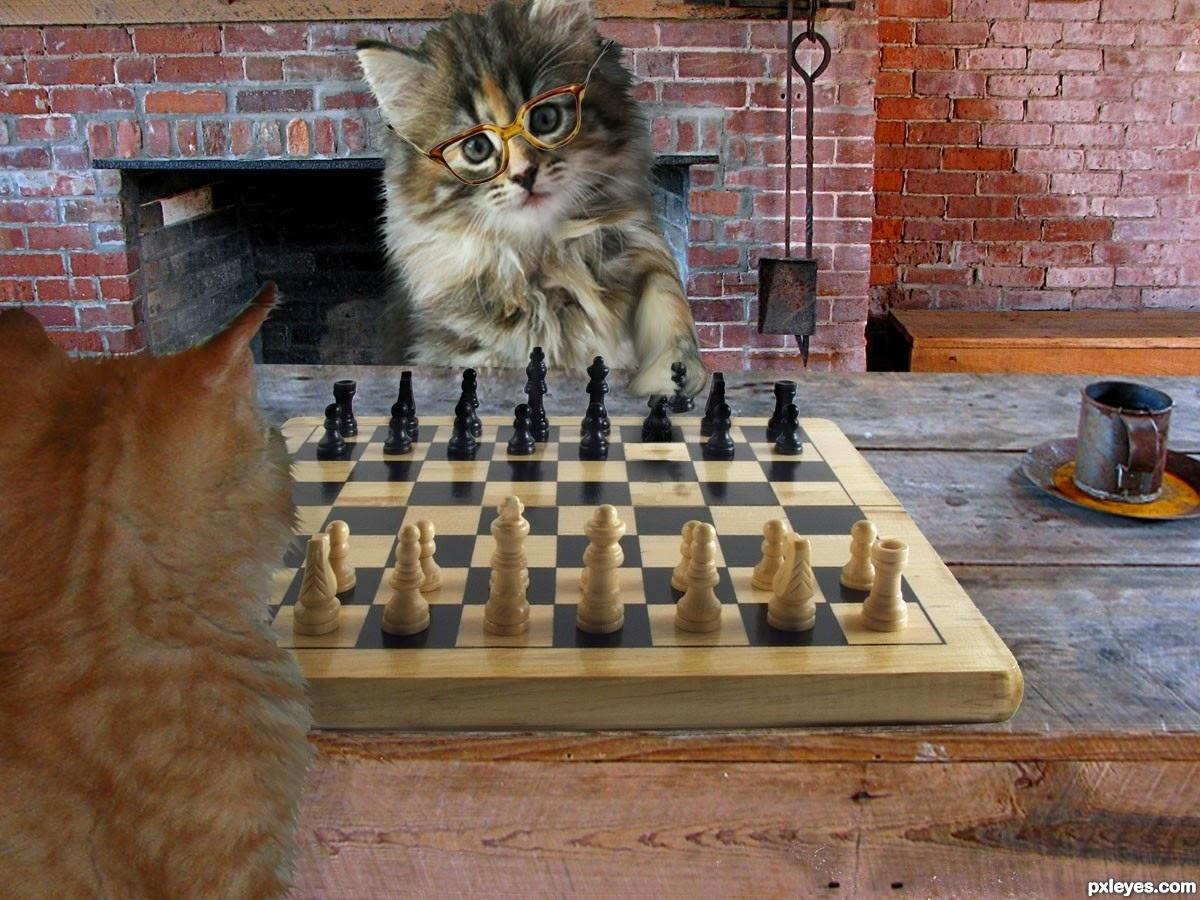 cara bermain catur trik catur