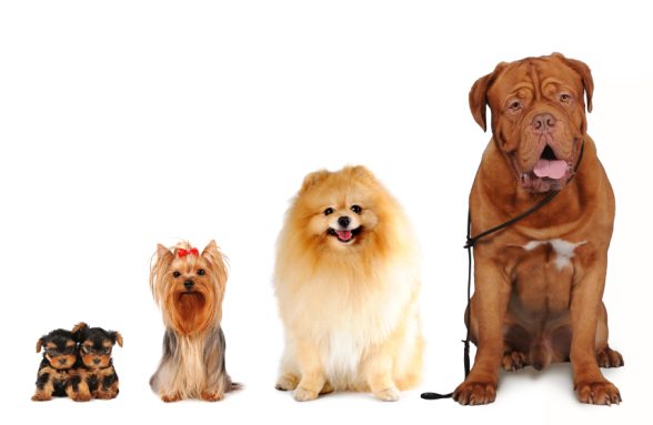 Top 10 dog breeds in the world the cozy pet blog for What are the best dogs in the world
