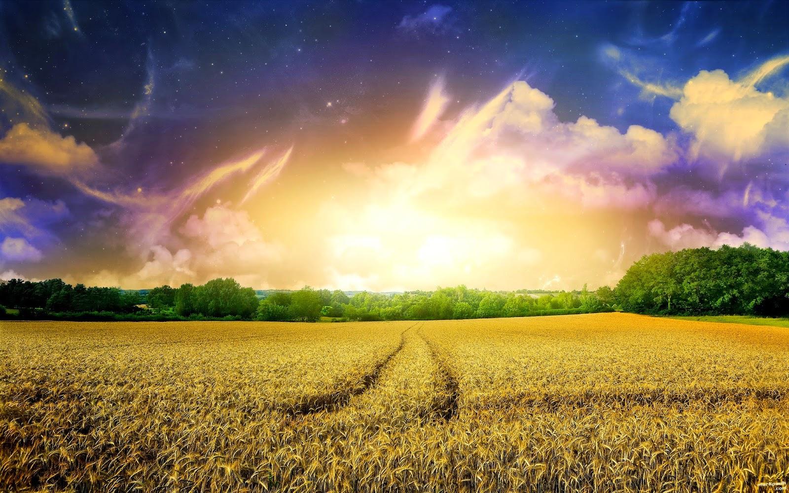 Sun Light in Field Wallpaper