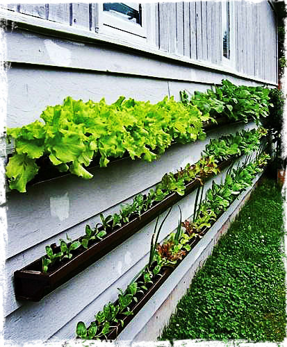 Awesome Http://www.apartmenttherapy.com/gardening Without A Garden  10 Ideas For Your Patio Or Balcony Renters Solutions 167221?image_idu003d3280546