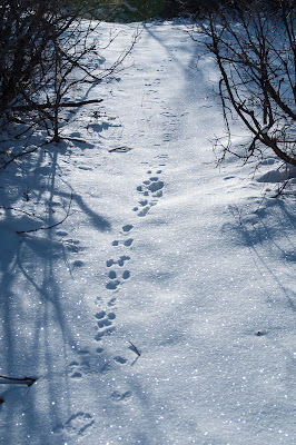 Rabbit tracks at South Valley Park