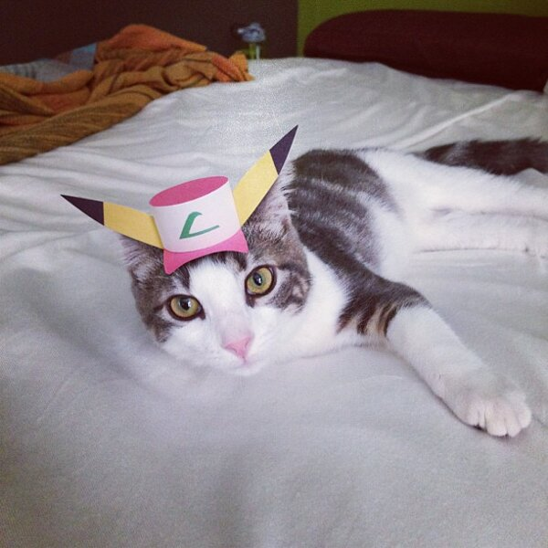 Kitty wears tiny hats (15 pics), tiny hats on cats, cute cats, kitten pics, cute kittens