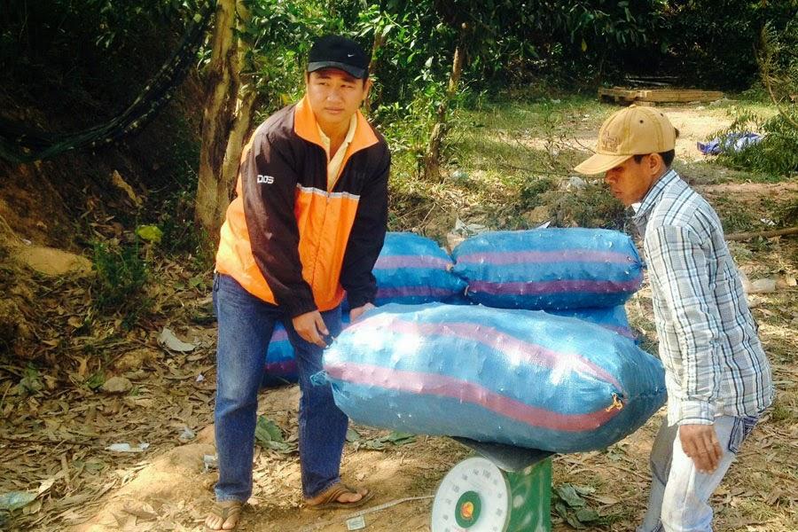 Gia Lai: Siết chặt kiểm tra trọng tải - Thương lái ép giá mì