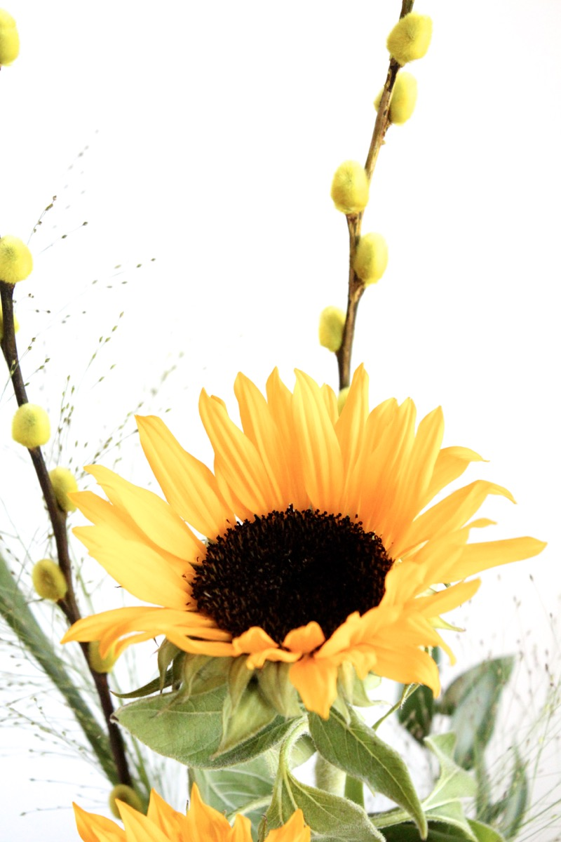 Auringonkukat ja pajunkissat