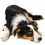 Votre chien, dominant ou dominé ?