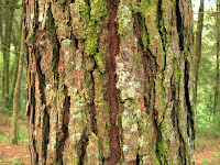 Does a tree need its layer of bark