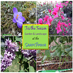 Tis the Season to Garden and Landscape
