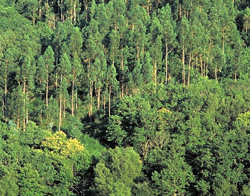 Raparigos espazos protexidos de galicia for Plantas forestales