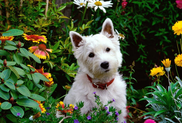 small puppy, garden of flowers, cute puppy